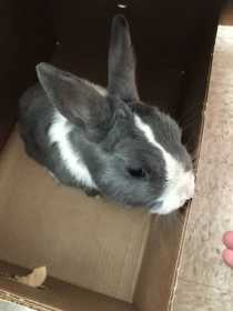Found Rabbit
