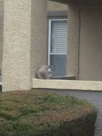 Sighting Cat